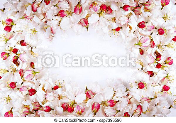 cherry blossom petals frame - csp7396596