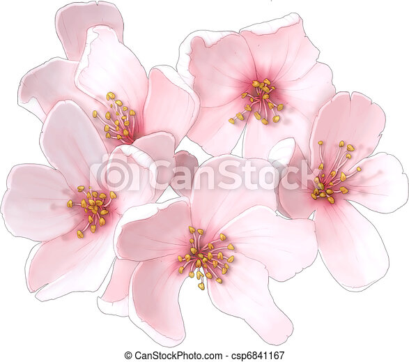 Cherry blossom clipart and stock illustrations 13001 cherry cherry blossom flowers mightylinksfo