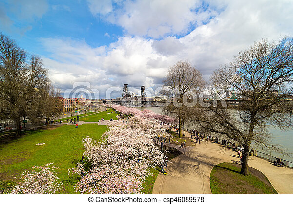 Cherry Blossom Trees at Portland Waterfront - csp46089578