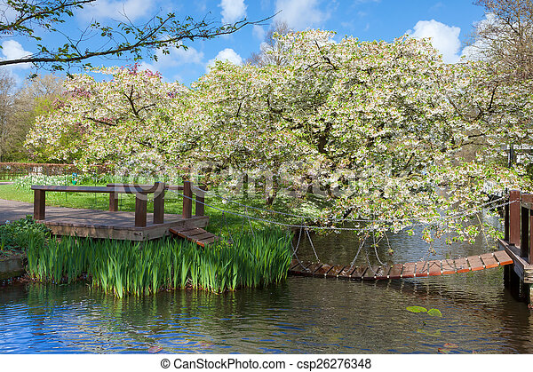 Cherry Blossom Trees in a Spring Garden - csp26276348