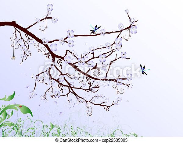cherry blossom - csp22535305