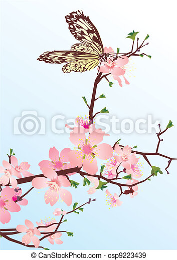 62f78b501 Cherry blossom with butterfly.