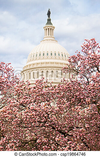 Cherry Blossoms at the Capttol Building - csp19864746