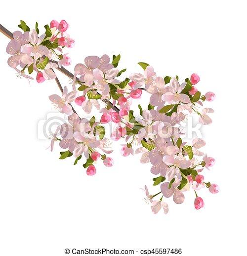 Cherry blossoms branch - csp45597486