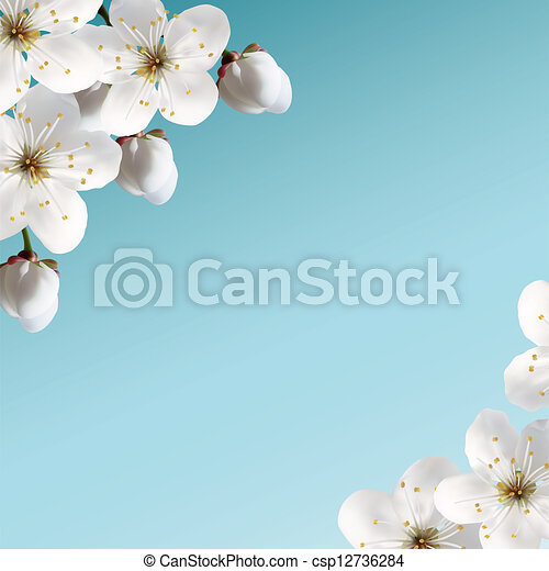Cherry Blossoms - csp12736284