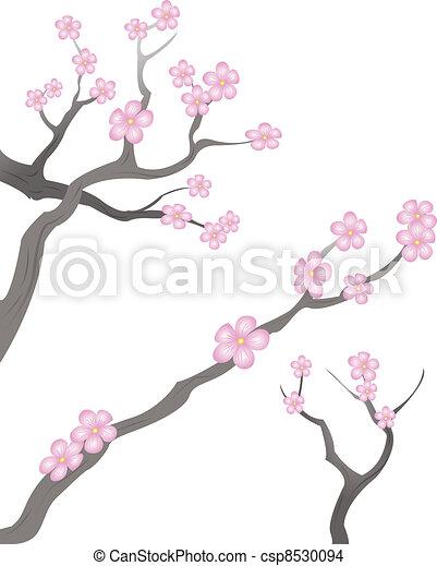 cherry blossoms - csp8530094