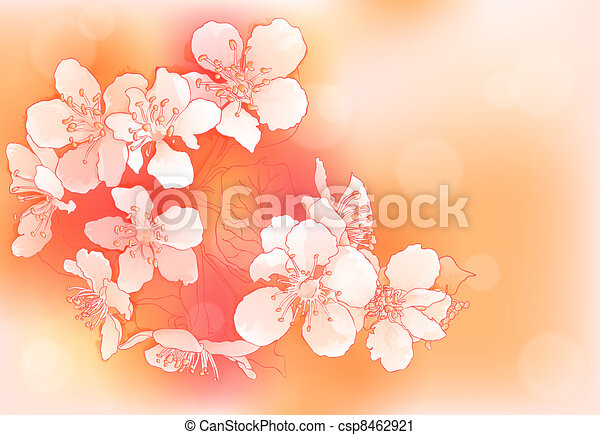 cherry blossoms - csp8462921