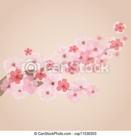 cherry blossoms - csp11536303