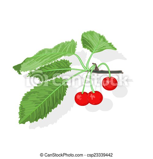 Cherry branch - csp23339442