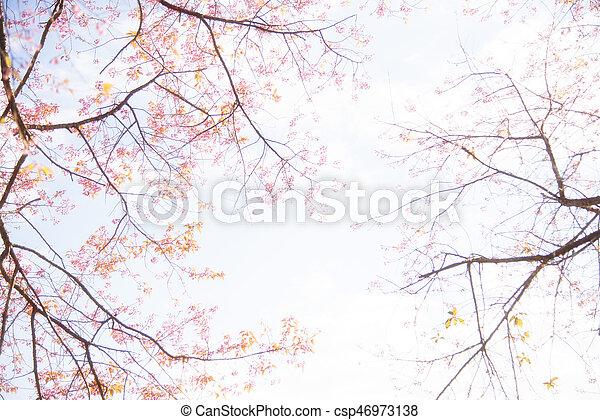 Cherry flowers - csp46973138