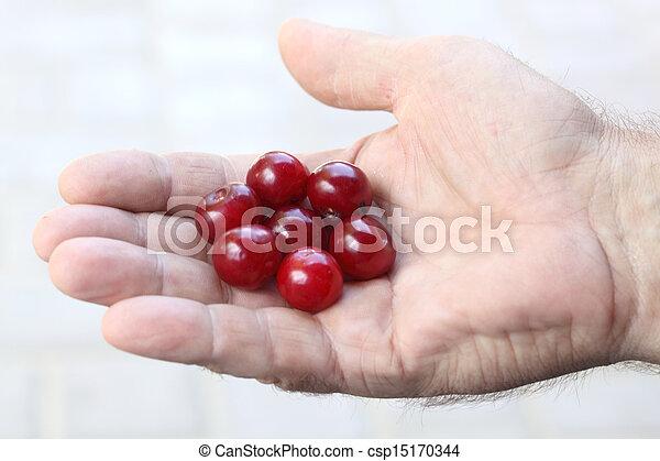 Cherry - csp15170344