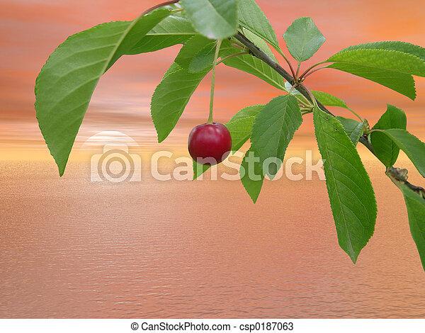cherry - csp0187063