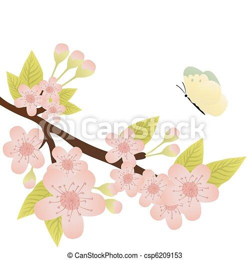 cherry-tree branch - csp6209153