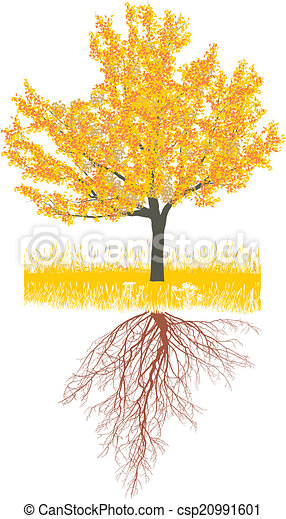 Cherry tree in autumn with roots - csp20991601