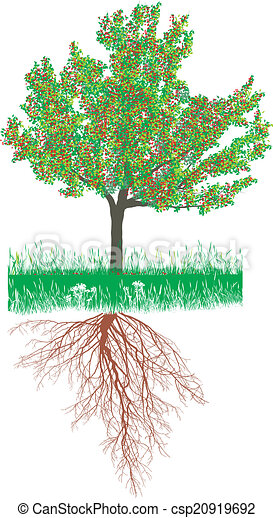 Cherry tree with roots with fruit - csp20919692
