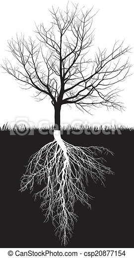 Cherry tree without leaves roots - csp20877154
