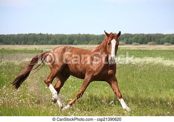 Chestnut horse in fright running away - csp21390620