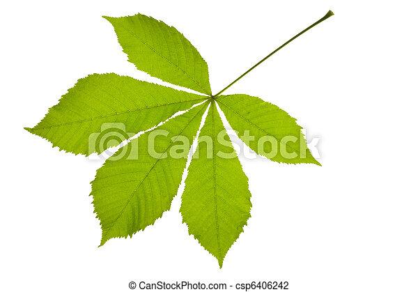 chestnut leaf - csp6406242