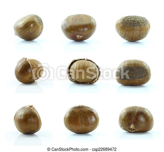 Chestnut on white background. - csp22689472