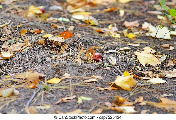 chestnuts on the ground - csp7526434