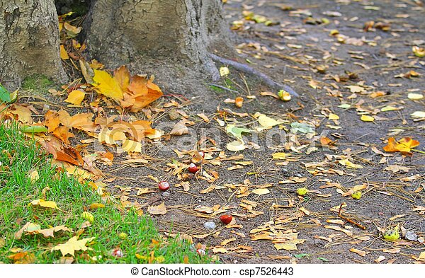 chestnuts on the ground - csp7526443
