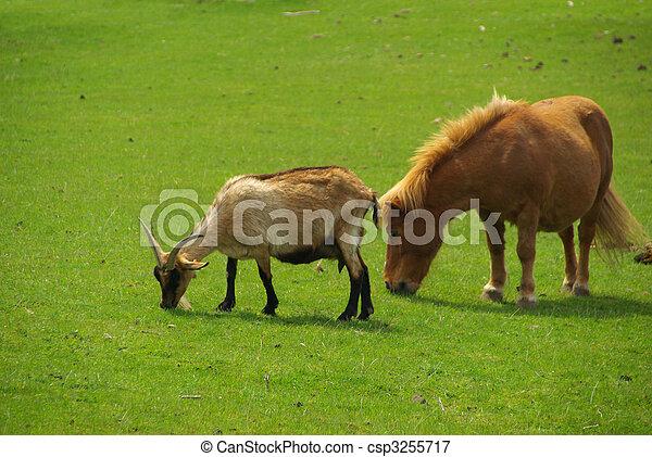 cheval, chèvre - csp3255717