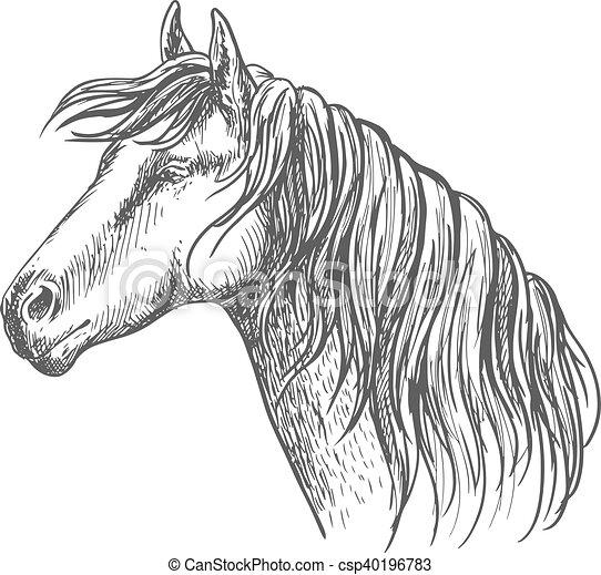 Cheval cou croquis crini re portrait long blanc - Dessin de cheval magnifique ...