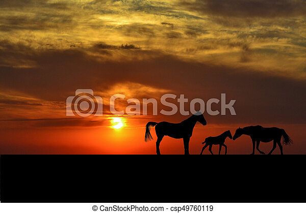 Cheval Coucher Soleil Silhouettes Famille