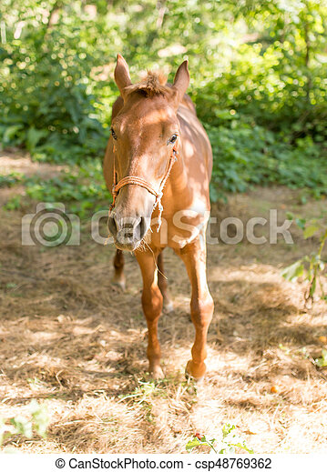 cheval, parc, nature - csp48769362
