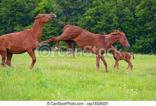 cheval - csp18326221