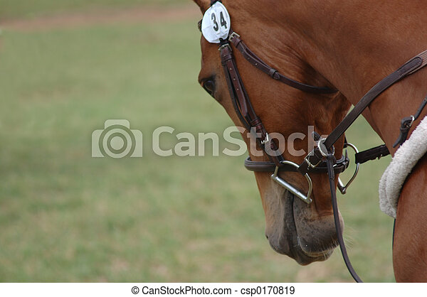 cheval, trot. - csp0170819