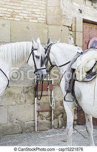 chevaux, blanc - csp15221876