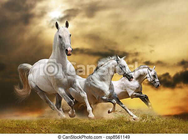 chevaux, blanc - csp8561149