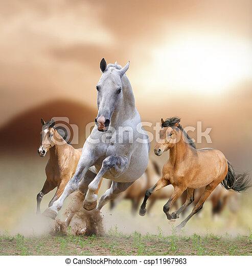 chevaux, coucher soleil - csp11967963
