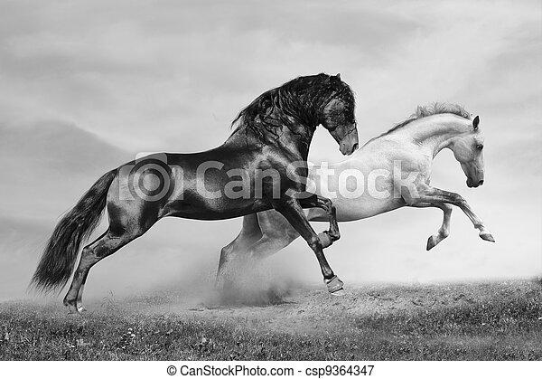 chevaux, course - csp9364347