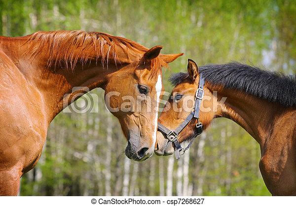 chevaux, deux - csp7268627