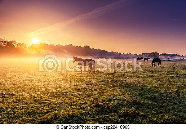 chevaux, pâturage, pâturage - csp22416963