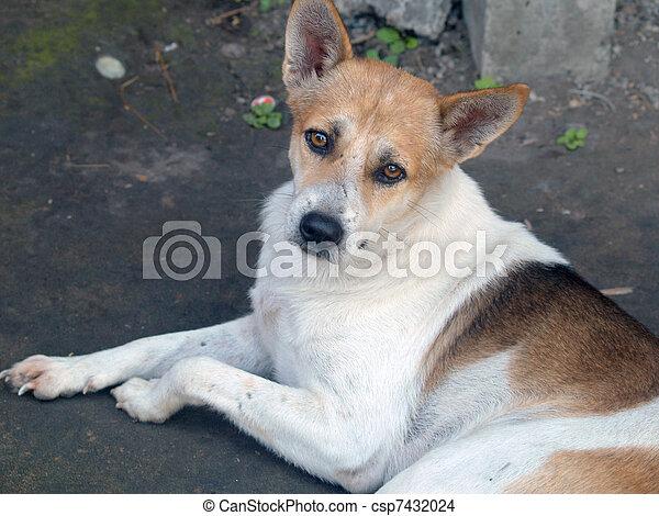 Perro callejero, ho chi minh - csp7432024