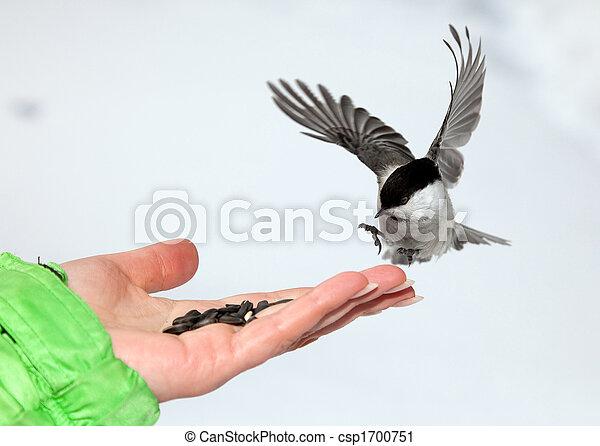 Chickadee - csp1700751