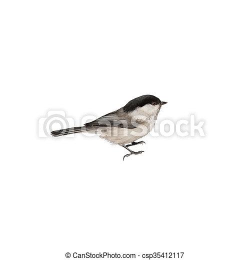 chickadee - csp35412117
