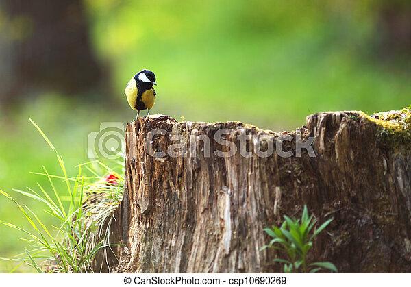 chickadee sitting on a stump - csp10690269