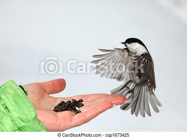 Chickadee - csp1673425