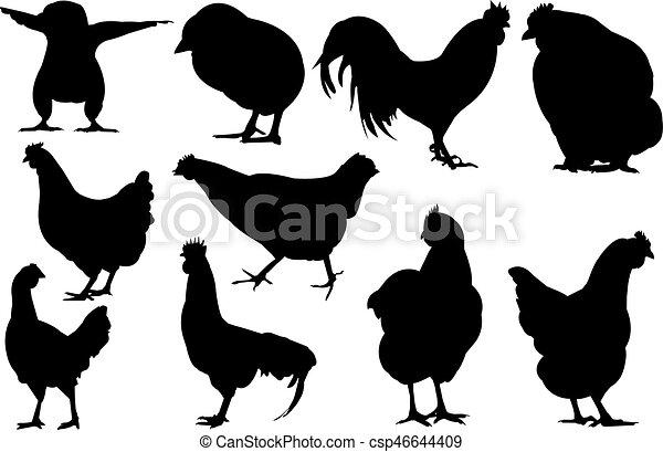 Chicken Silhouette vector illustration - csp46644409