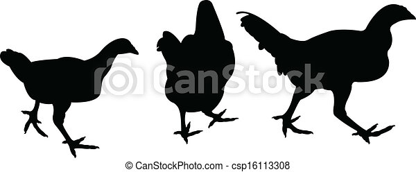 chicken silhouette vector - csp16113308