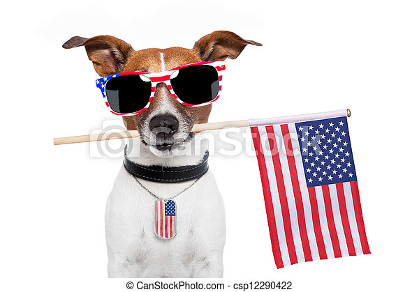 chien, américain - csp12290422