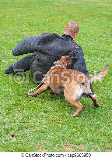 chien assaut - csp9603950