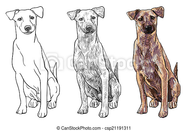 chien brun, séance - csp21191311
