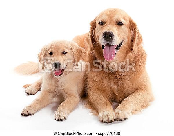 chien, buddys - csp6776130