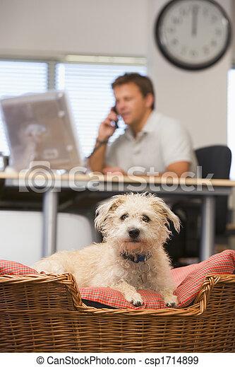 chien bureau, fond, maison, mensonge, homme - csp1714899