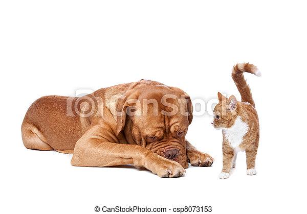 chien, chat - csp8073153